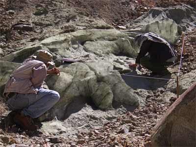 Fosil Makhluk Hidup Terbesar di dunia « Freddy Setiawa